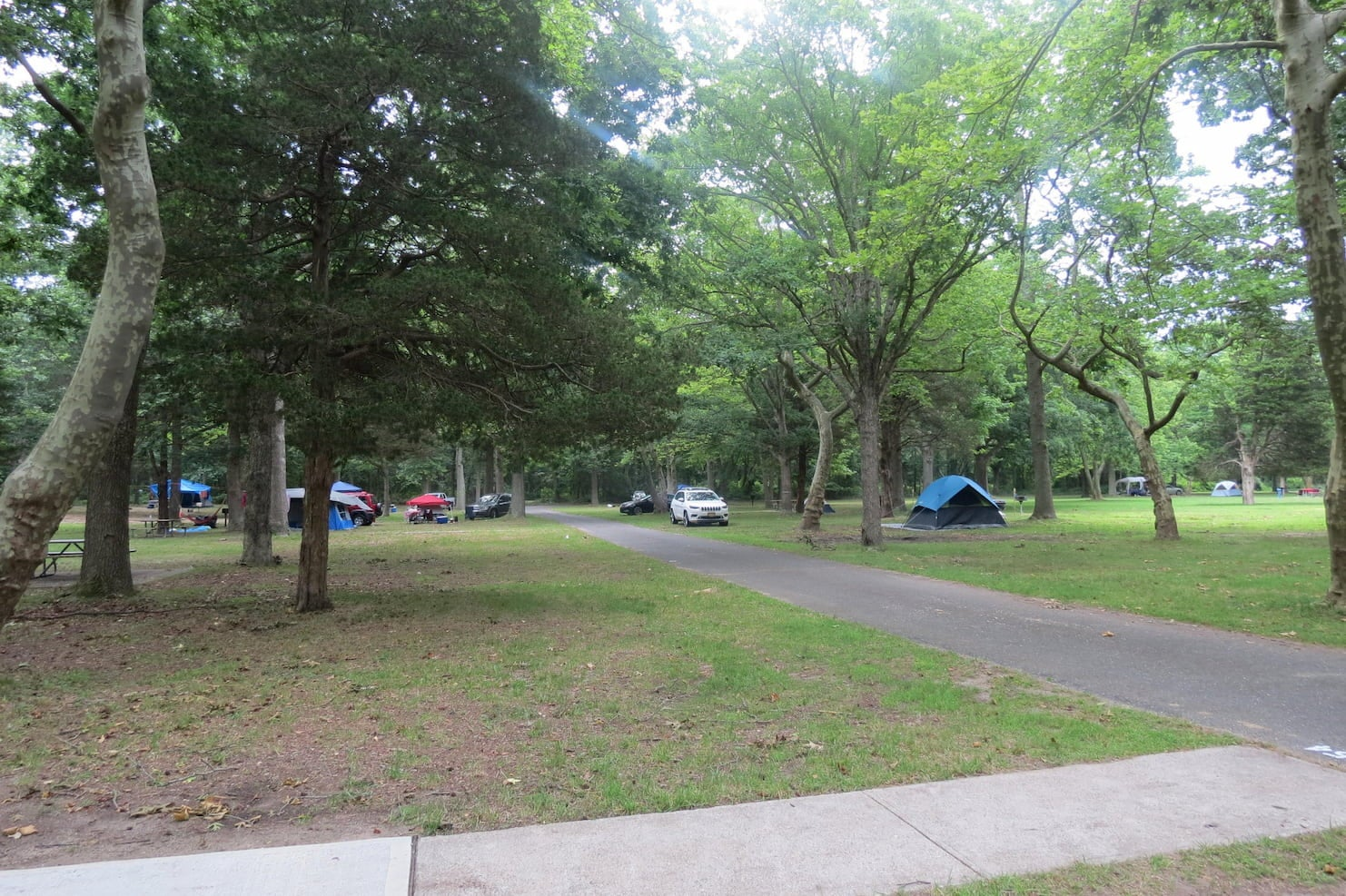 Forested campground with paved sidewalks running through it.