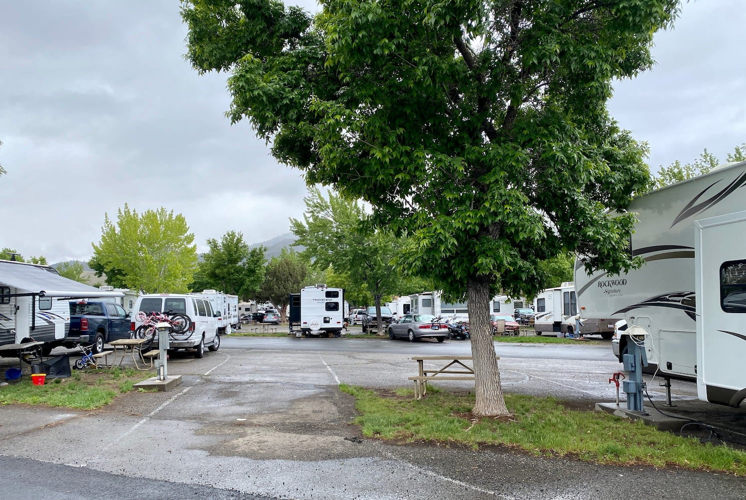 Lush trees and lawn in a paved RV park.