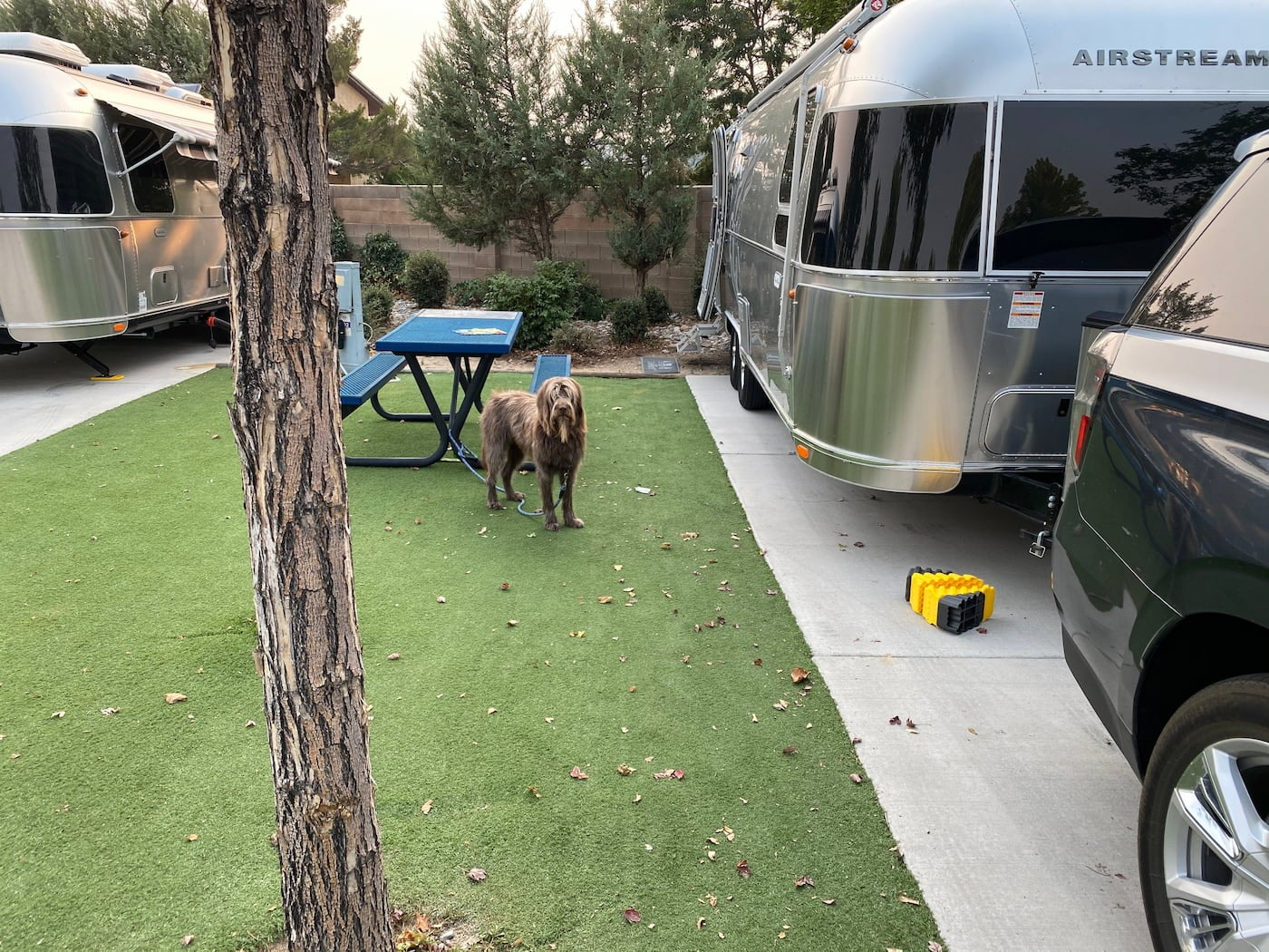 Long haired dog hanging out a a forested campsite between two airstreams.