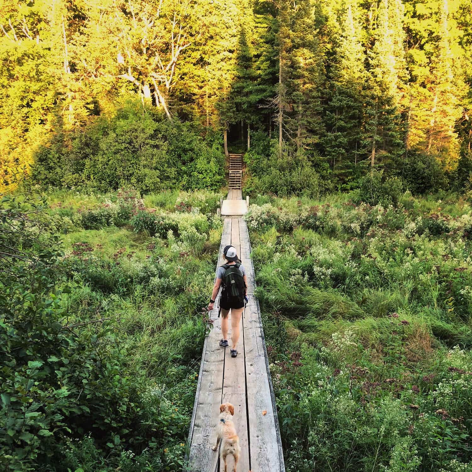 woman and dog walking on elevated trail platform