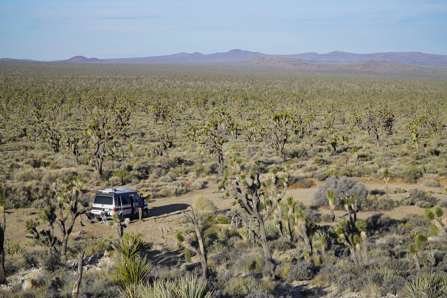 The Wayward home van in the desert surrounded by Joshua trees.