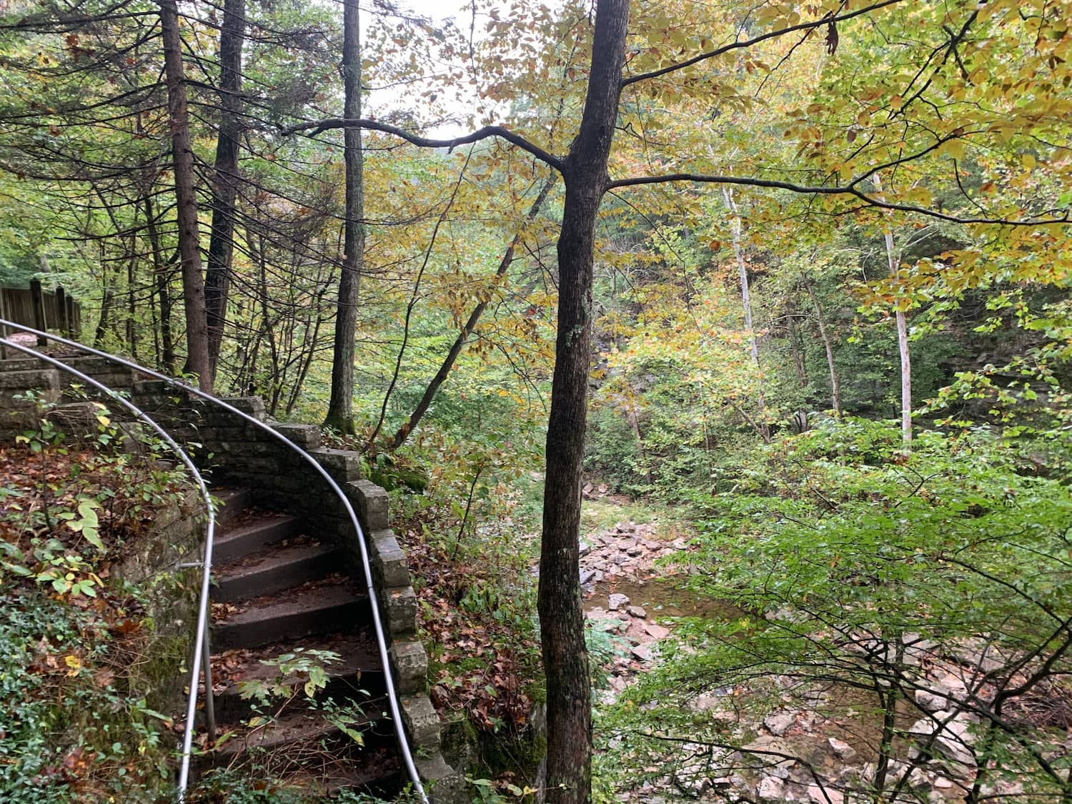 stairs in a deep forest