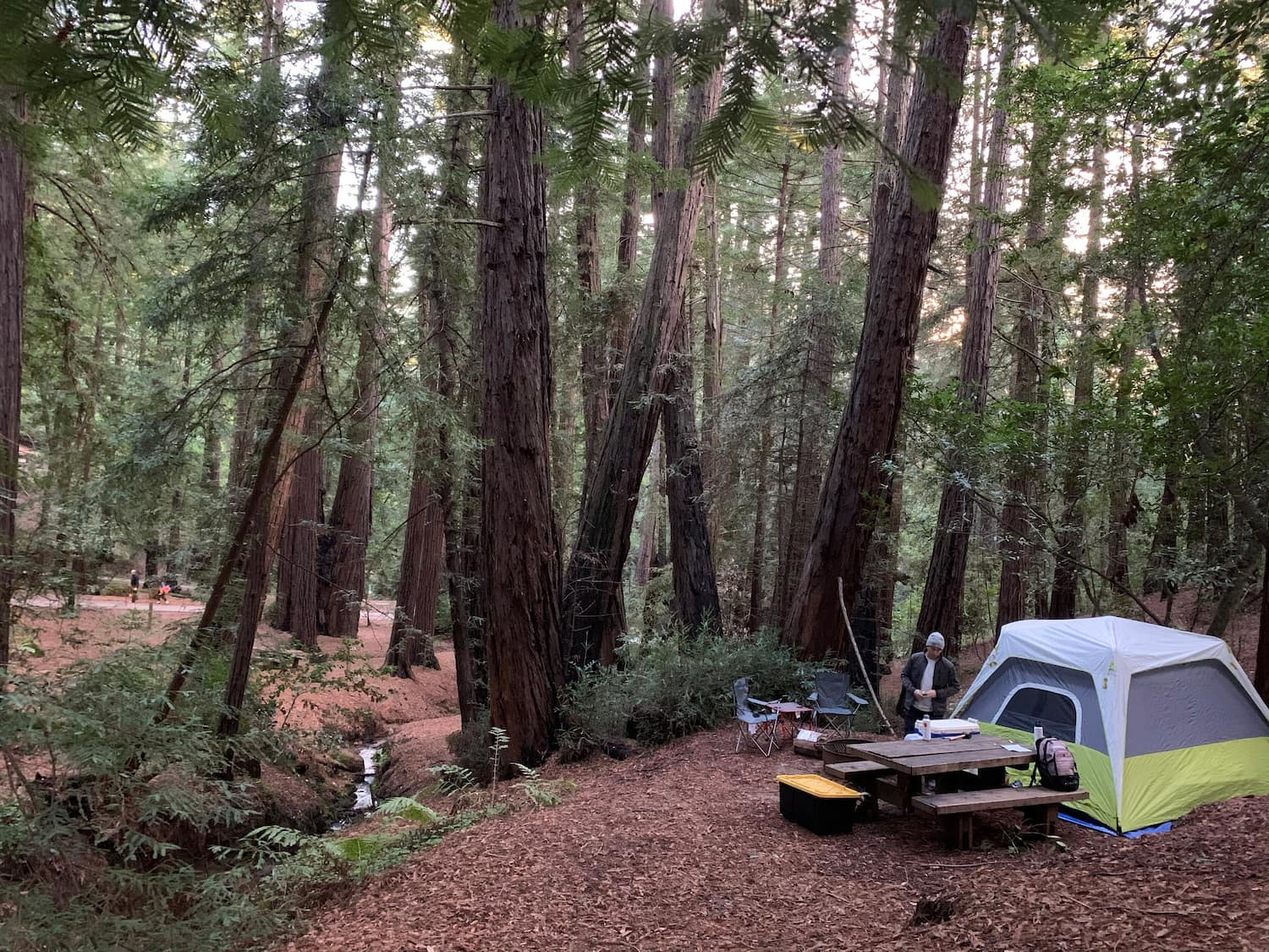 tent at campsite in thick forest