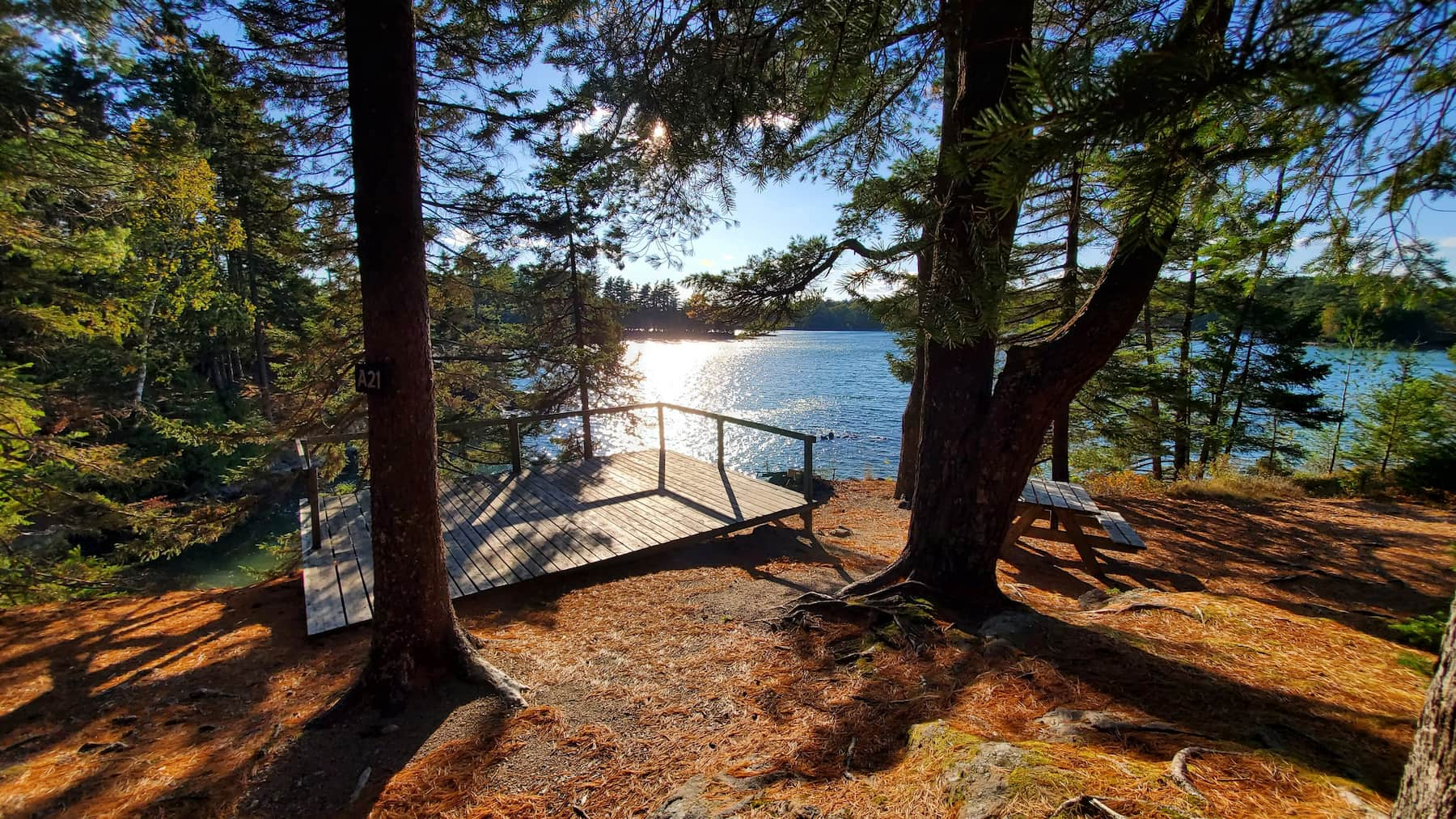 Campground platform in the forest right beside the ocean in Maine.