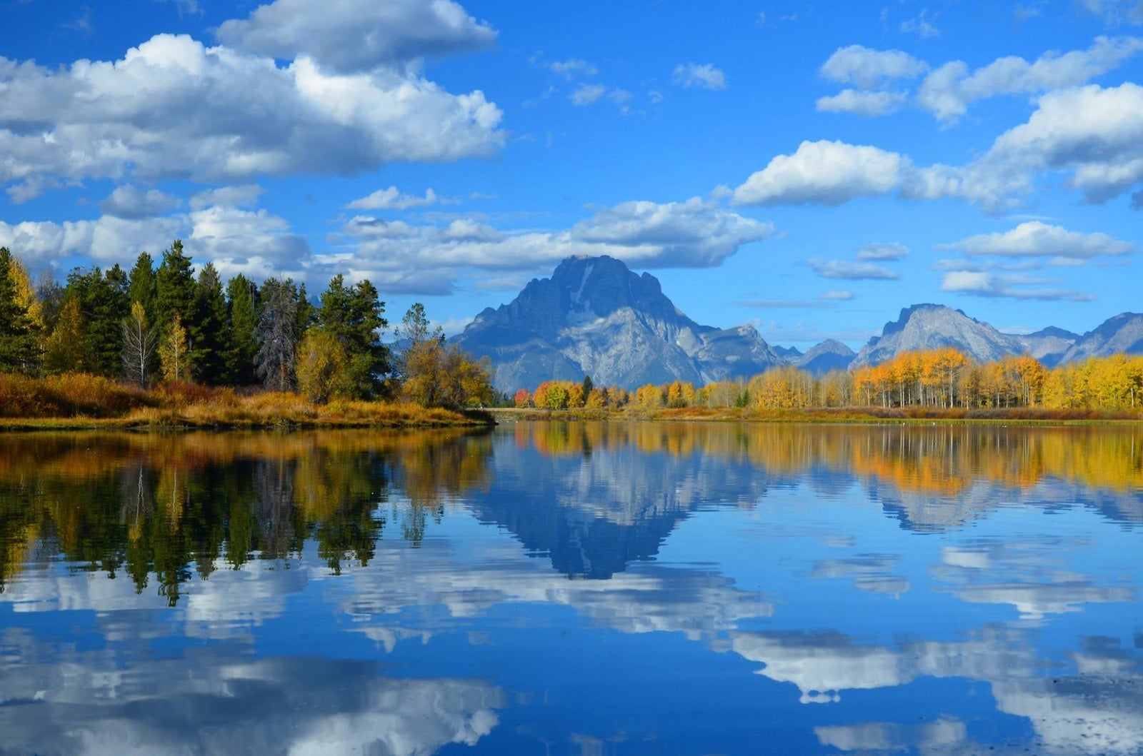 Golden aspen trees below the Grand Tetons at Oxbow Bend.