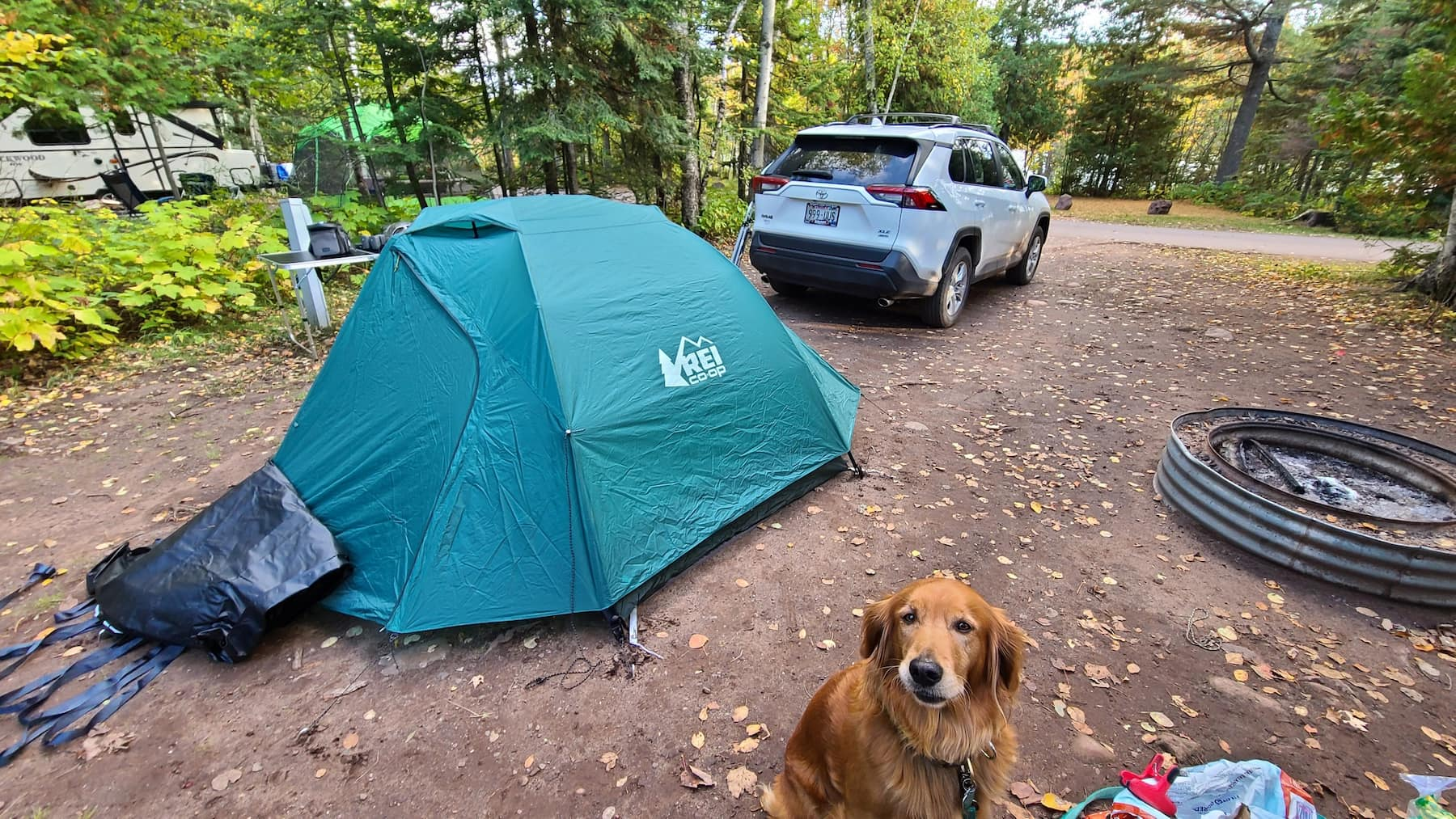 Golden retriever sitting at campsite beside tent and car , in the forest.