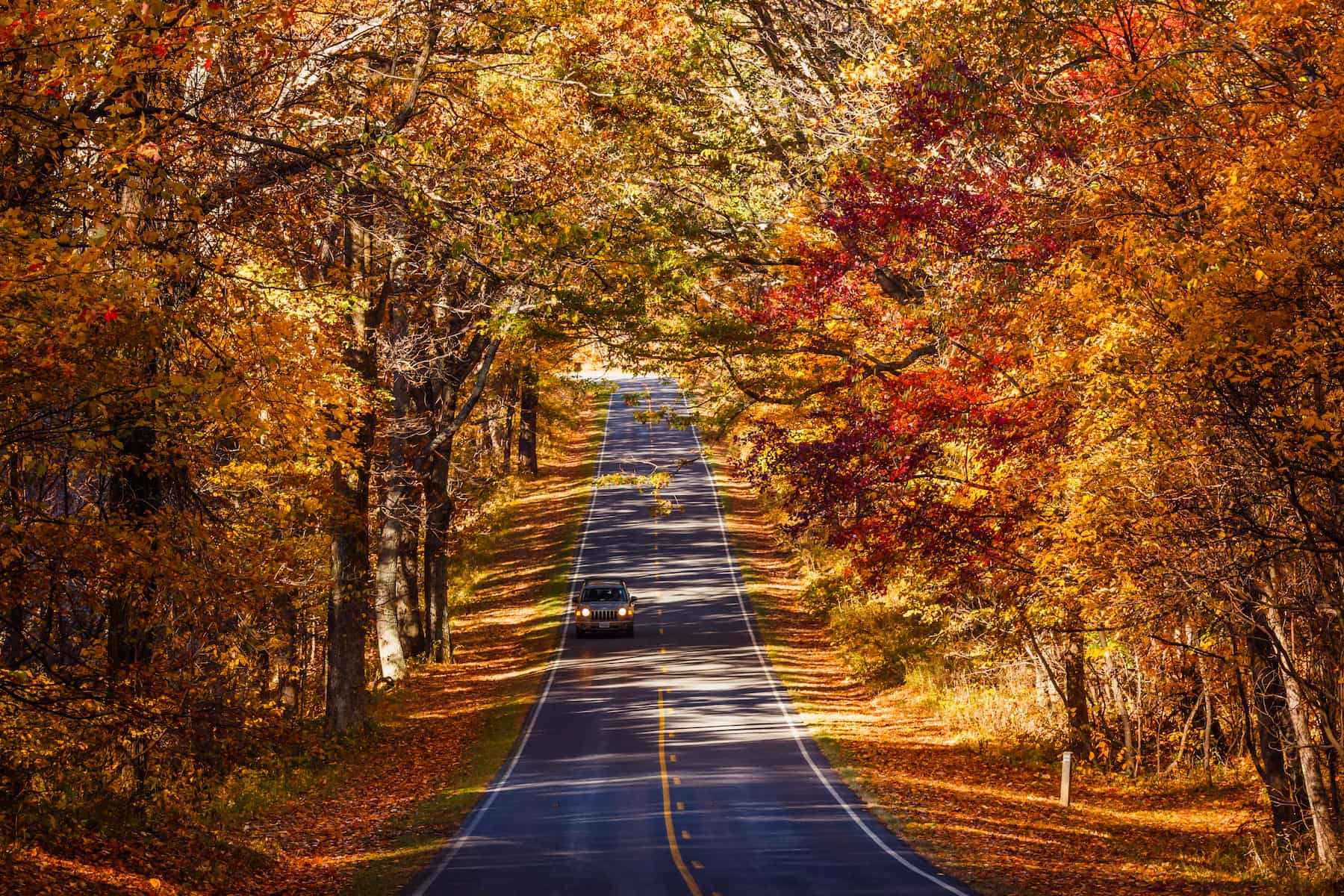 The Golden fall foliage over Skyline drive in Shenandoah National Park.