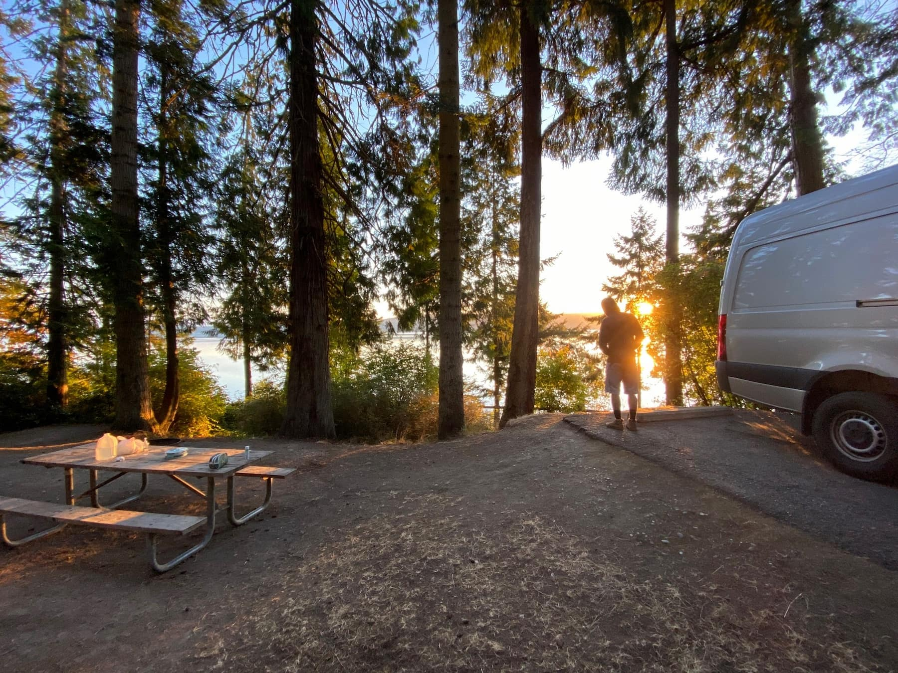 Sunset glow through the forest at a campground in the Olympic Peninsula.