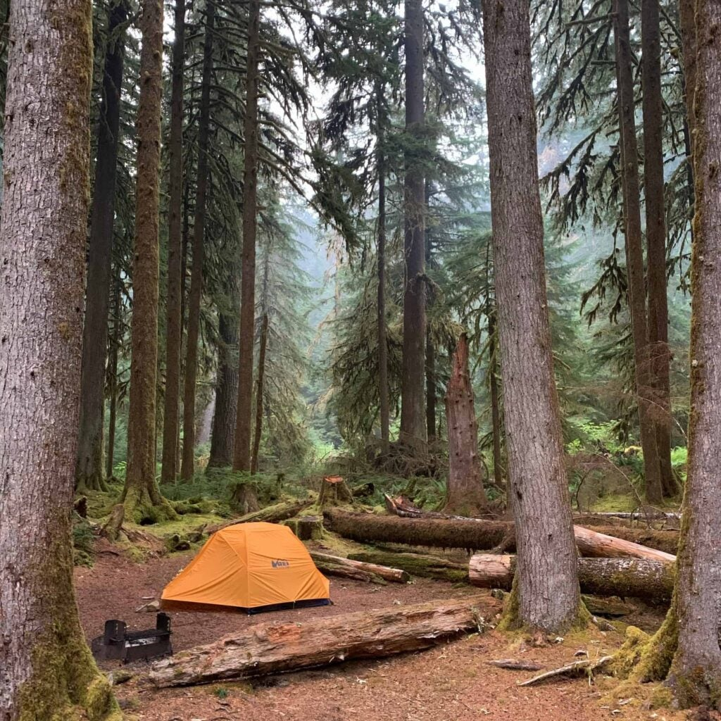 Orange tent in foggy pacific northwest woods on the Olympic Peninsula.